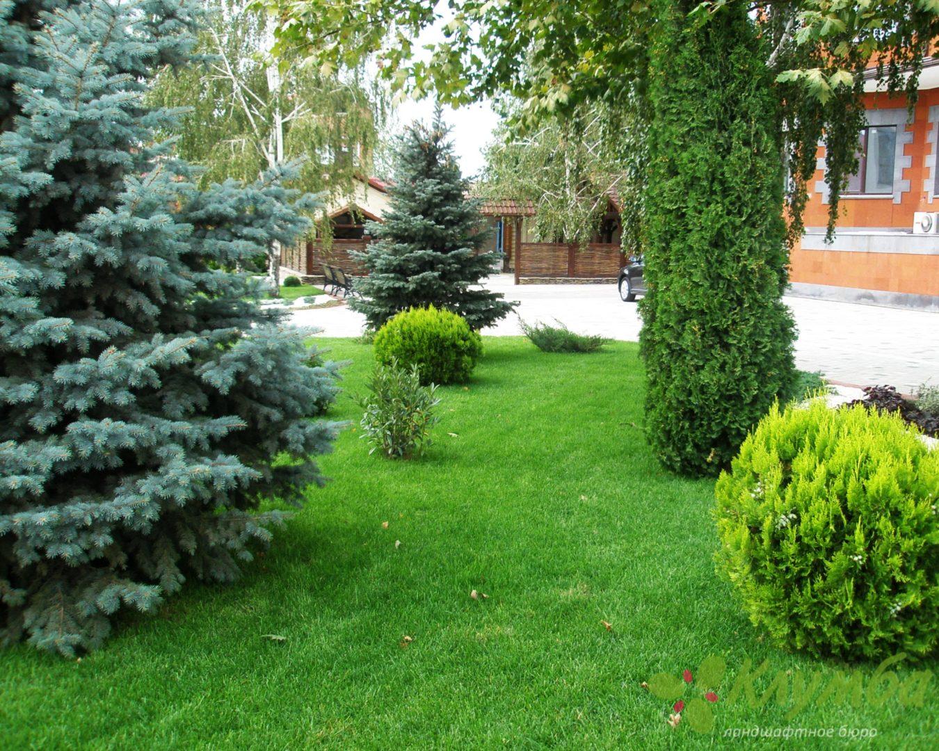Посадка хвойных деревьев весной: рекомендации 36