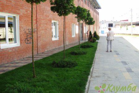 Озеленение городской улицы
