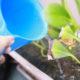 Восстановление растений