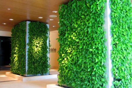 Вертикальное озеленение в Краснодаре