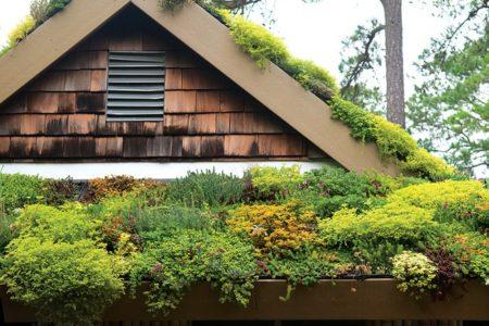 Озеленение крыш в Краснодаре