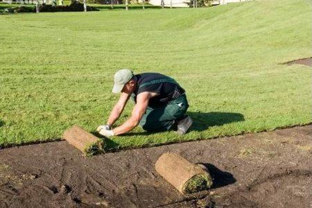 Посев газона в Краснодаре