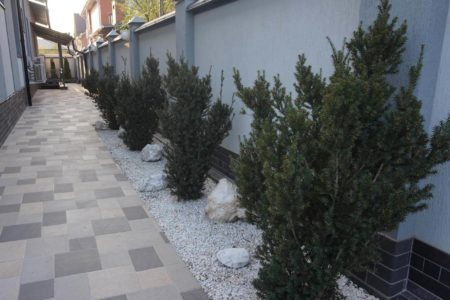 Посадка растений в Краснодаре
